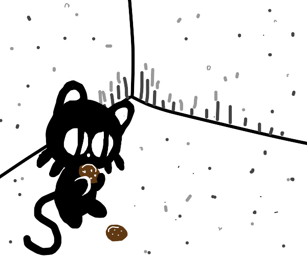 cat eating a cookie