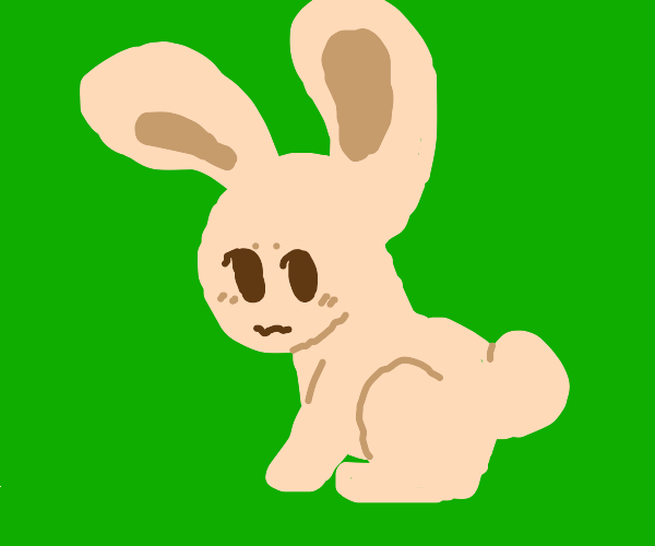Cute bunny in grass