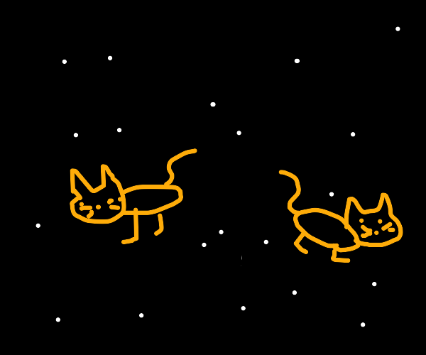 Cats in space!