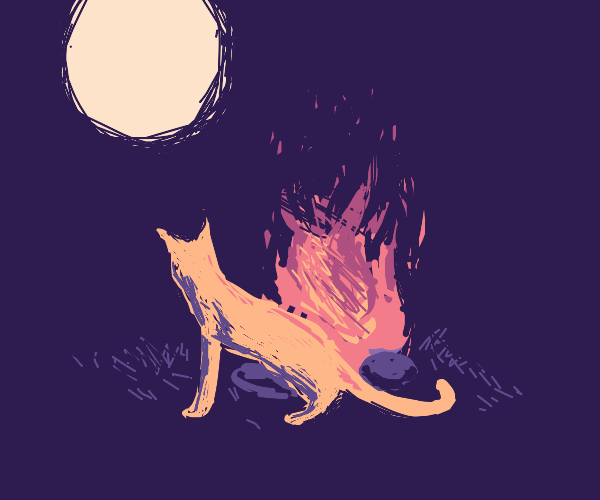 cat by a bonfire watching the moon