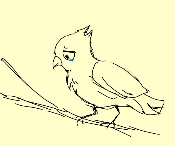 bird is sad