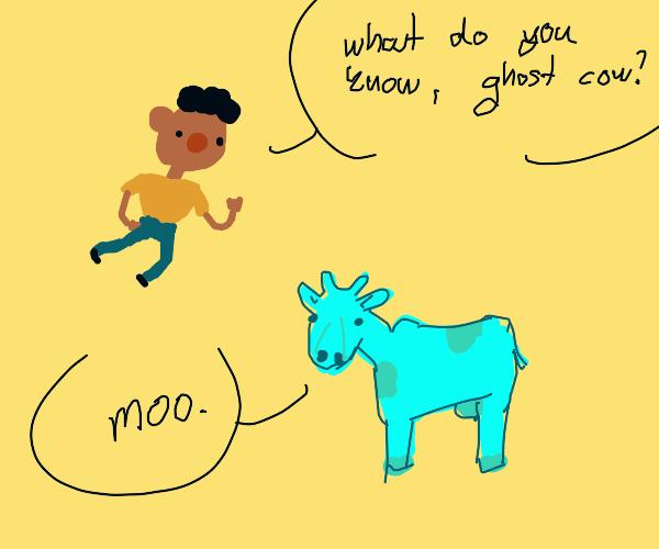 Boy questions a transparent bovine