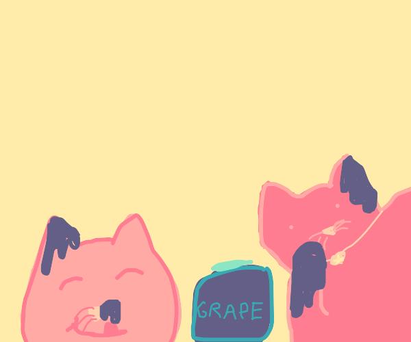 Two kitties in sauce