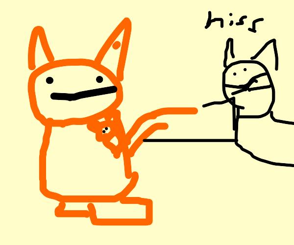 Cat VS Kangaroo