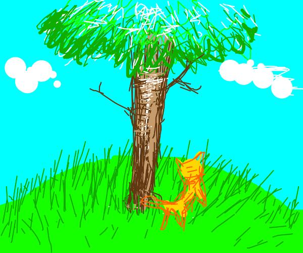 Orange Cat Runs Around A Tree