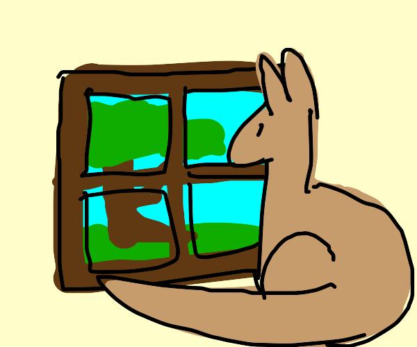 Kangaroo looking out window