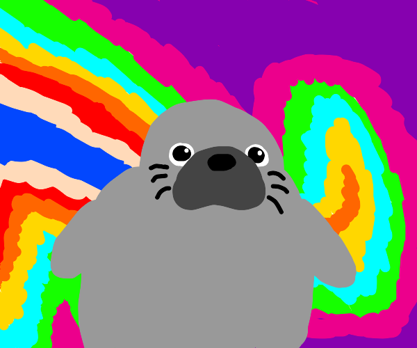 Seal on Shrooms