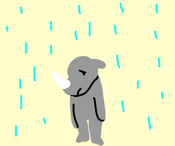 rhino looking sad in the rain