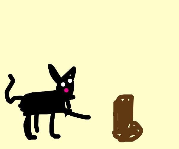 cat finds boot