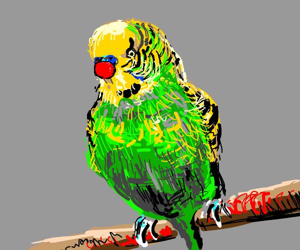 Comical Parakeet