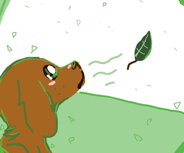 a dog watching a leaf