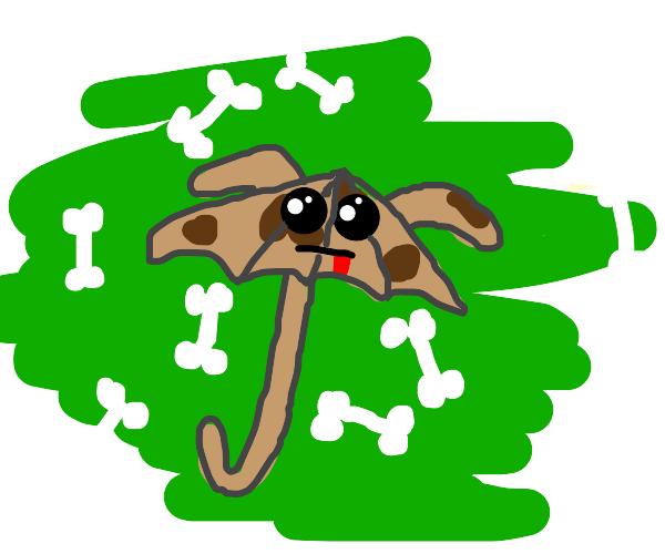 umbrella dog