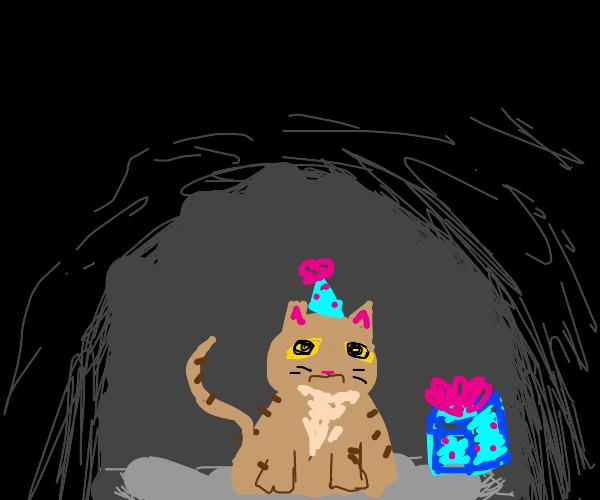 cat sad cause nobody came to her birthday:(