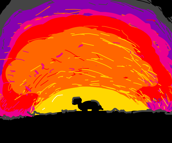 turtle looking at the sunset