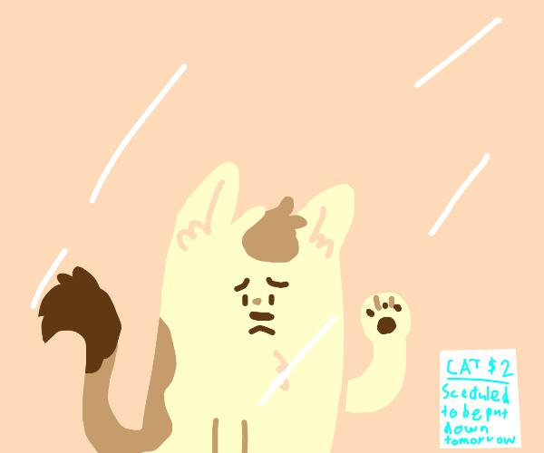 stock market value cat