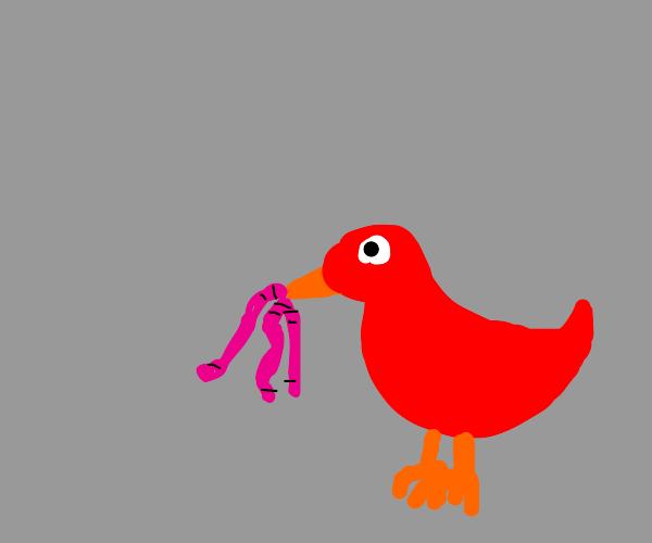 bird eating worms
