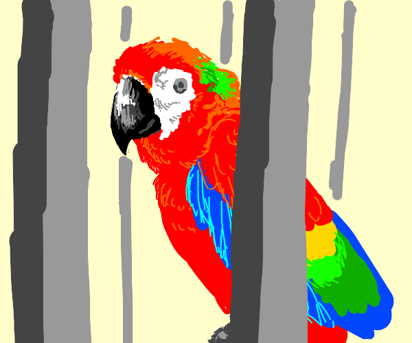 A colorful parrot in it's cage