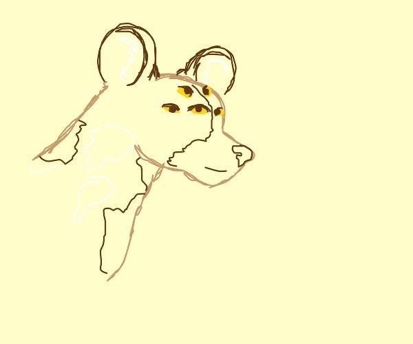 many eyed african wilddog (tweesee)