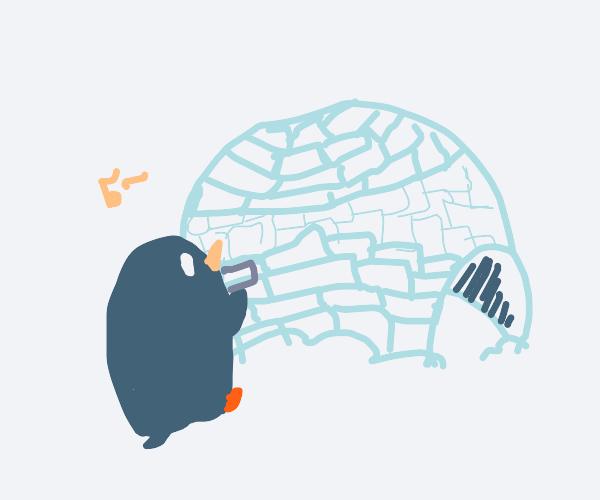 Penguin building an igloo