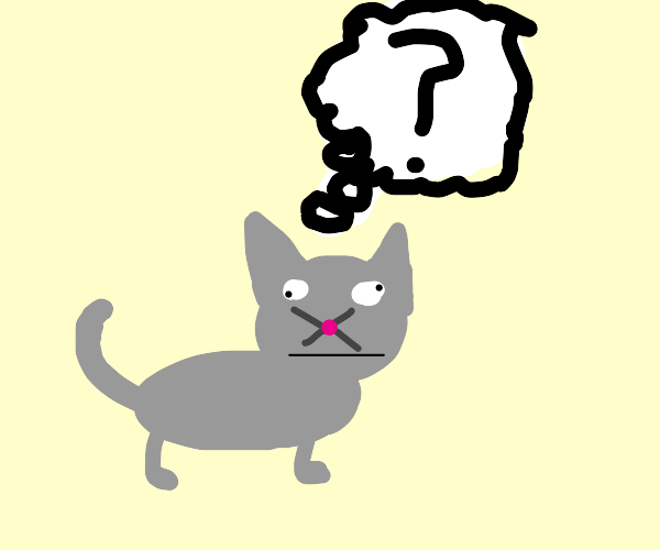 confused gray cat