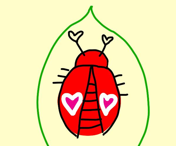 A love bug