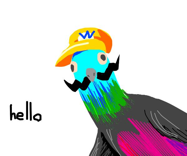 Wario pigeon greets you