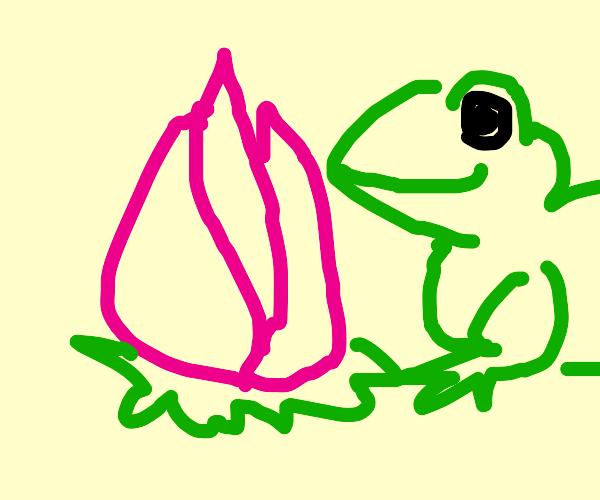 unbloomed lotus flower