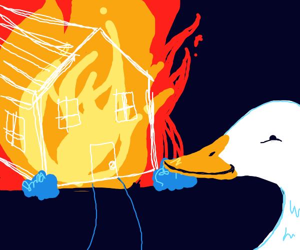 Bird watches House burn