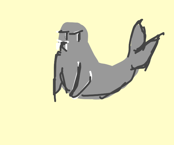 Grey seal (animal)