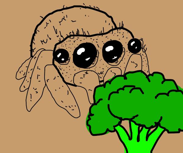 Spider eats broccoli