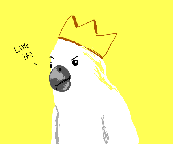 Cockatoo showing off its golden crown