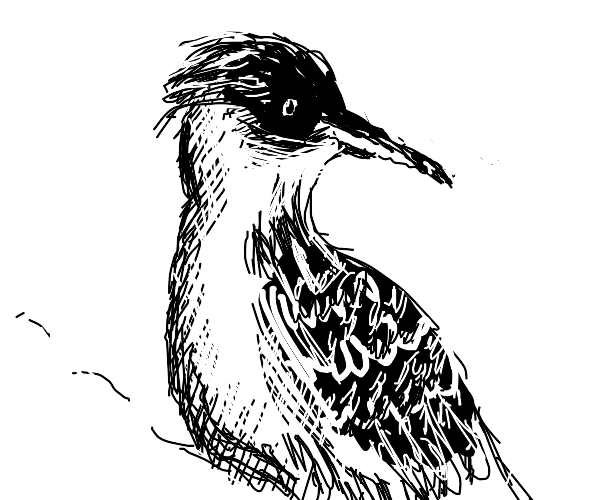Woodpecker from the 1800s