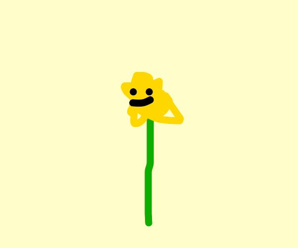 smiling dandelion