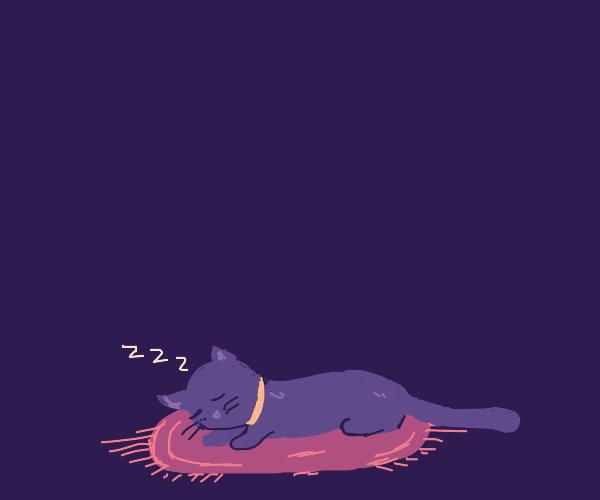 Cat sleeps on a rug