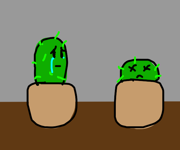 one cactus is dying, the other is upset