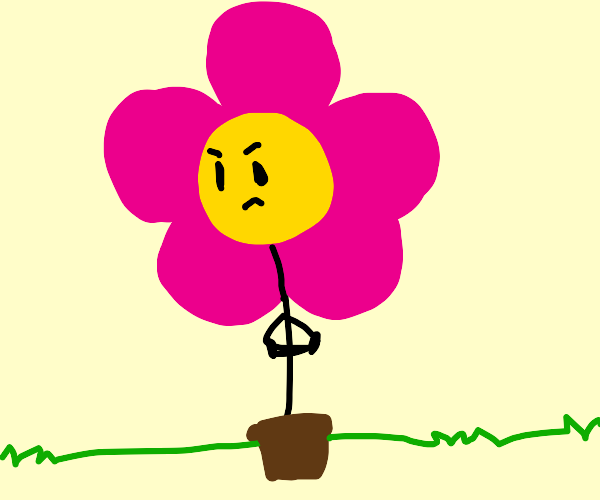 Flower doesn't want to be put in a pot