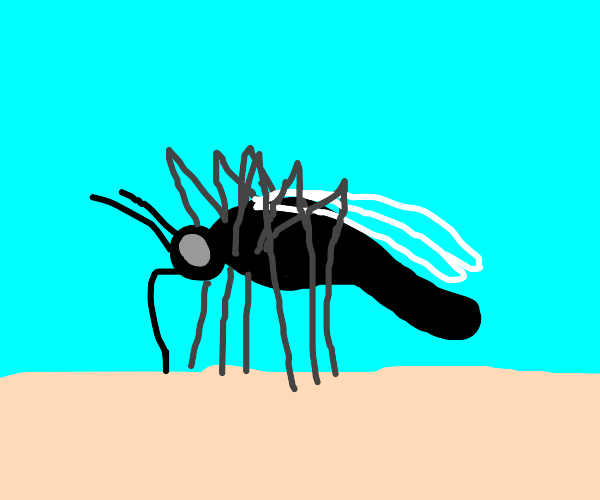 Mosquito bout to suck blood