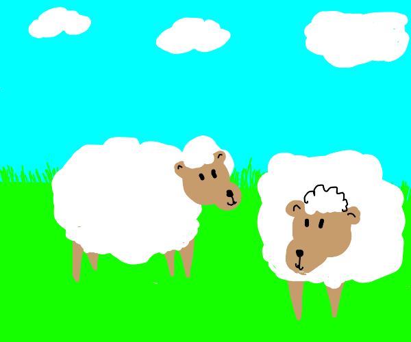 two happy sheep :)