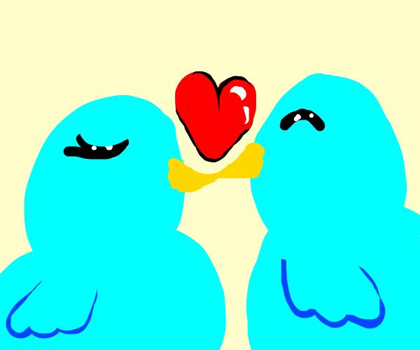 Bluebird in love