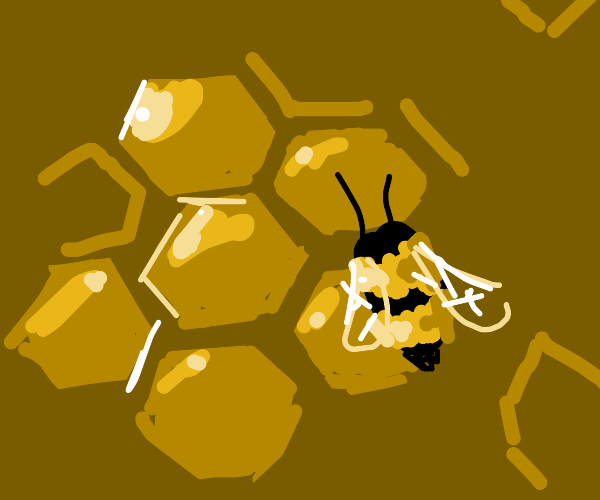 bees in a honeycomb