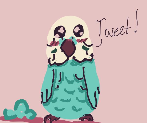 lil budgie(parakeet)