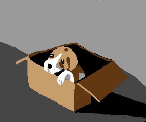 Abandoned puppy in a box