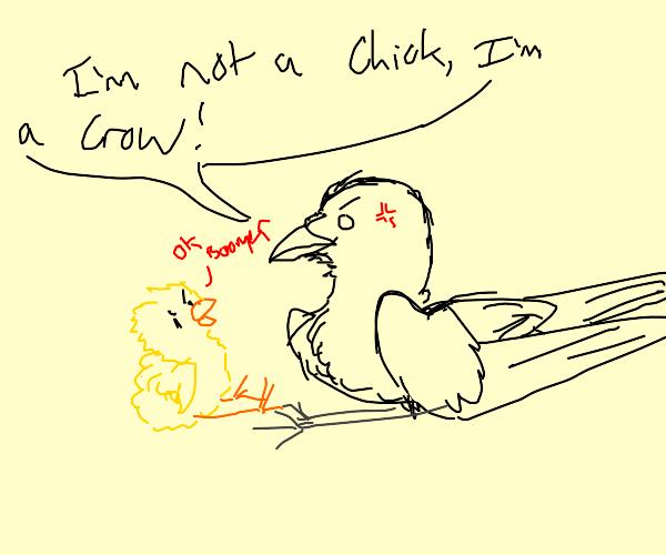 black bird says im not a chick im a crow