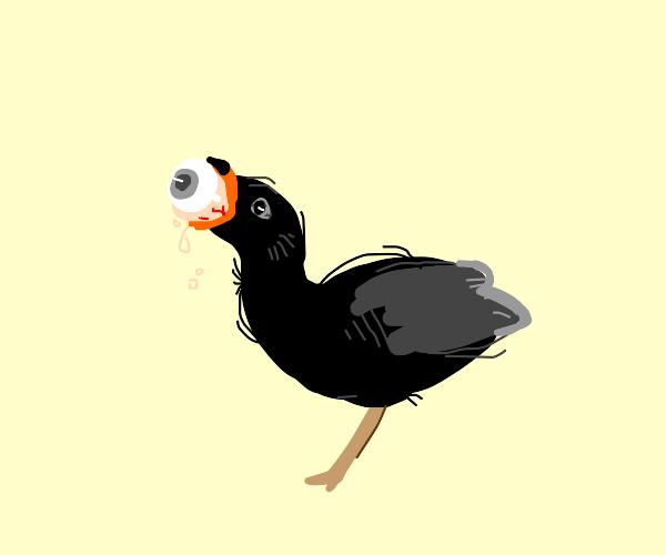 Dark seagull eats eyeballs