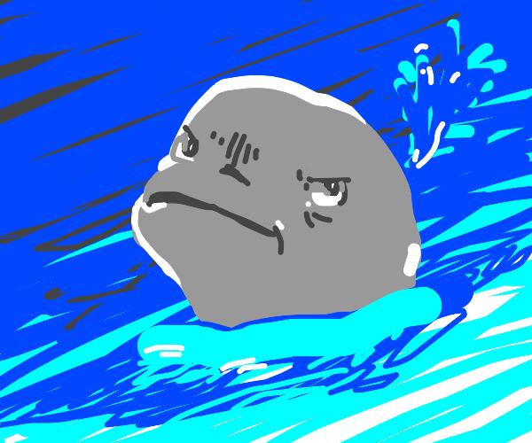 Unimpressed Beluga whale