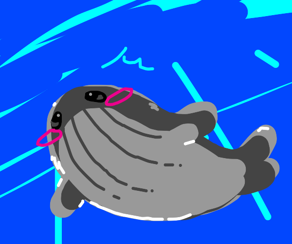 Adorable whale