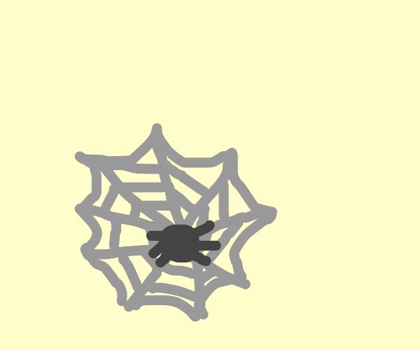 Spider sleeping in web hammock