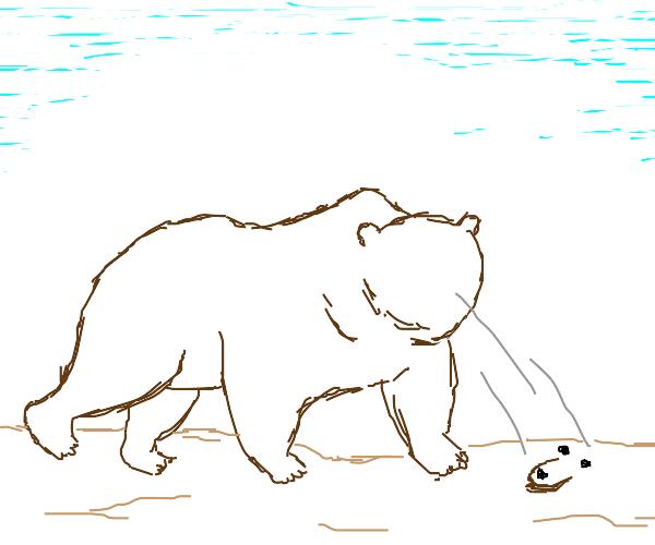 bear loses face