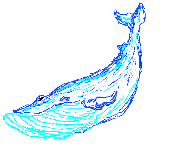 A great blue whale