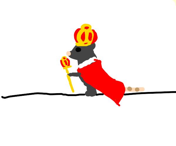 Royal Rat